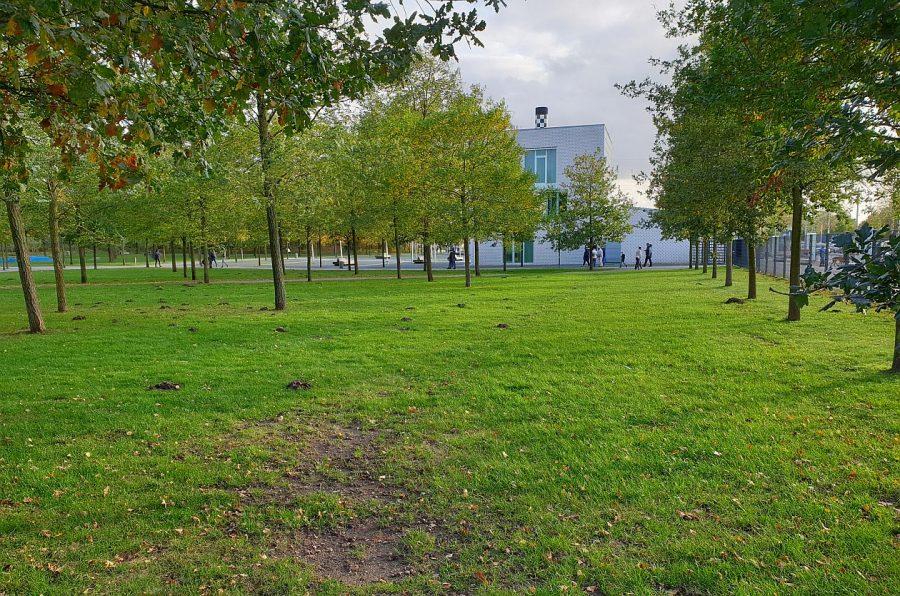 """Möglicher Ort für den """"KuBuS"""": Wiese im Eingangsbereich des Norderstedter Stadtparks"""